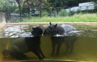 【多摩動物公園】持ち込みお弁当を食べられる場所・カフェ・エアコン付き休憩所は?