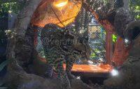 よこはま動物園ズーラシア・外でお弁当を食べられる場所